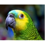 clínica veterinária animais silvestres Pestana