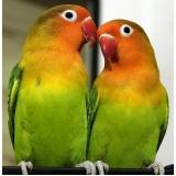 clínica veterinária para aves