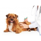 consulta medicina veterinária agendamento Conjunto Metalúrgicos