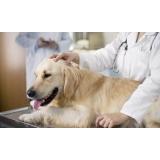 consulta médico veterinário Vila Polopoli
