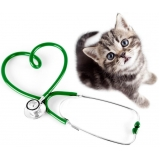 consulta oftalmológica veterinária agendamento Jardim Ivana