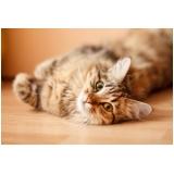 consulta veterinária felina agendamento Butantã