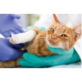 consulta veterinária felina Continental