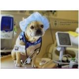 consulta oftalmológica veterinária