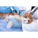 endereço de centro veterinário popular Continental