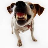 endereço de veterinário para cães Cipava