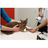 exame clínico veterinário Presidente Altino