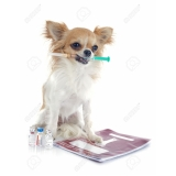 exame de sangue em cães Bela Vista