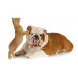 exames laboratoriais para animais domésticos Jardim Veloso