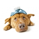 exame clínico veterinário