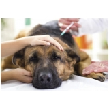 onde achar veterinário animais domésticos Centro