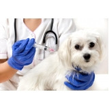 onde encontrar hospital veterinário para cães Centro