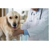 onde encontrar veterinário cardiologista Vila Yolanda