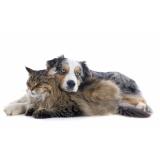 onde encontro vacinas em animais domésticos Baronesa