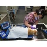 onde fazer limpeza de tártaro em cães idosos Umuarama