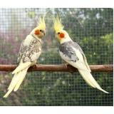 onde tem clínica veterinária para aves Conjunto Metalúrgicos