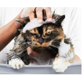 pet shop para banho e tosa de gatos Vila Osasco