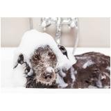 pet shop para banho e tosa para animais domésticos City Bussocaba