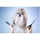 pet shop para banho e tosa para cachorro Conceição
