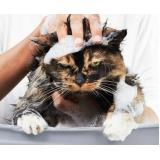 pet shop para banho e tosa para gatos Vila Yara