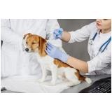procuro por veterinário neurologista Jardim Ester Yolanda
