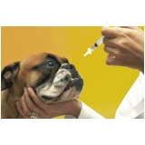 vacina contra gripe em casa São Pedro