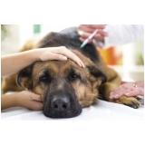 vacina múltipla canina em casa Granja Viana