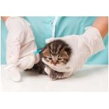 vacina múltipla gatos Granja Viana