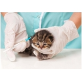 vacina múltipla gatos Jardim Veloso