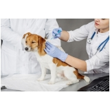 vacinas em animais de estimação em casa Vila Campesina