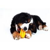 vacinas em animais domésticos custo Padroeira II