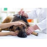 vacinas para animais Cidade das Flores