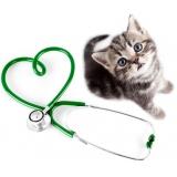 veterinário cardiologista Jaguaribe