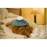 veterinário para cachorro local Centro