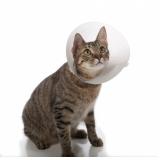 veterinário para castração de gato Baronesa