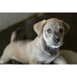 veterinário para cirurgia de cachorro Padroeira II