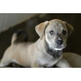 veterinário para cirurgia de cachorro Vila Yolanda