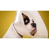 veterinário para cirurgia em animais de pequeno porte Conjunto Metalúrgicos