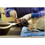 veterinário para limpeza de tártaro em cães idosos Vila Osasco