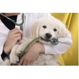 veterinário oftalmo