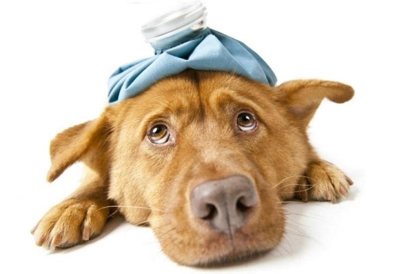 Vacina contra Gripe Bela Vista - Vacinas em Animais Domésticos
