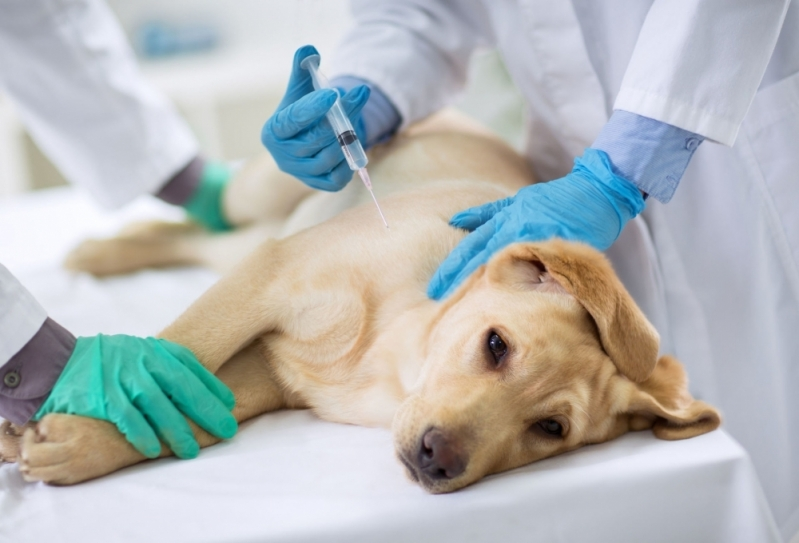 Vacina contra Raiva em Casa Centro - Vacinas em Animais Domésticos