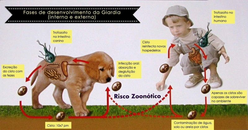 Vacina Giardíase Canina em Casa City Bussocaba - Vacinação em Animais de Companhia