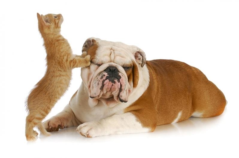 Vacinação em Animais de Estimação Conceição - Vacina Múltipla Importada