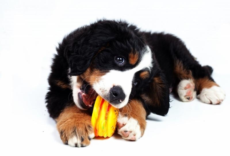 Vacinas em Animais Domésticos Custo Padroeira II - Vacinação em Animais de Companhia
