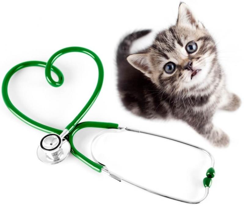 Veterinário Cardiologista Santa Maria - Veterinário Oftalmo