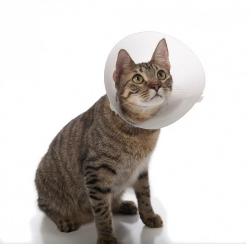 Veterinário para Castração de Gato Baronesa - Cirurgia em Animais de Companhia