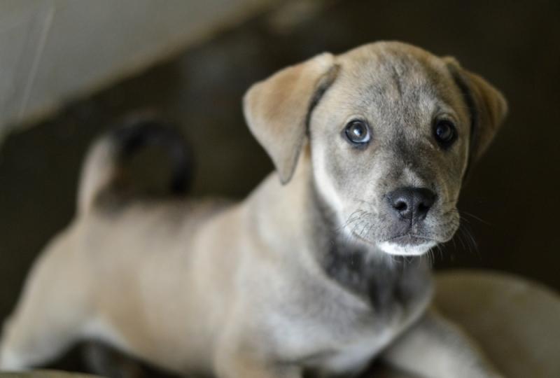 Veterinário para Cirurgia de Cachorro Santa Maria - Cirurgia em Animais de Companhia