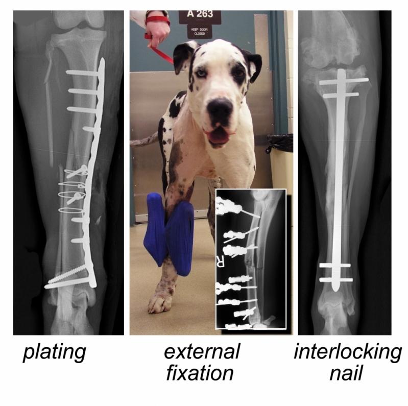 Veterinário para Cirurgia Ortopédica em Cães e Gatos Cidade de Deus - Cirurgia em Animais de Companhia